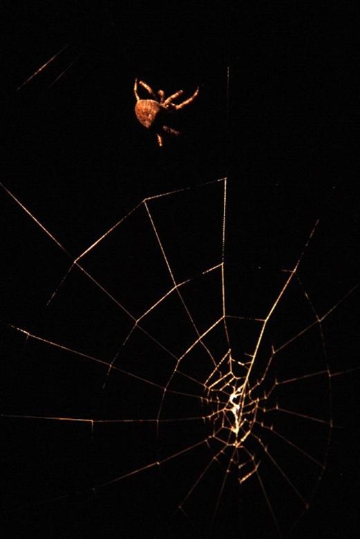 Arañas cuida viñedos